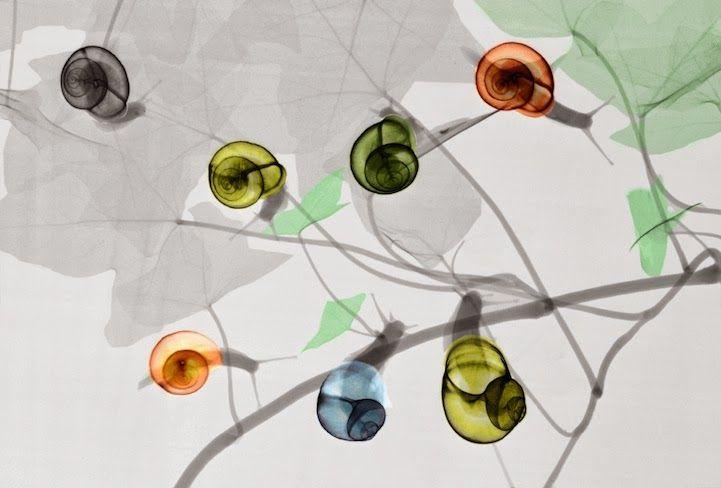 Los bioramas de Arie van 't Riet (rayos X, color y mucho talento)