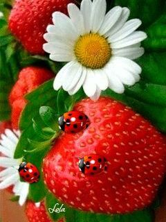 Wonder if Lady Bugs eat strawberries or just use them for camouflage.