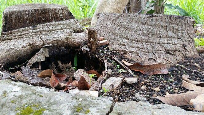 Cueva en dos árboles