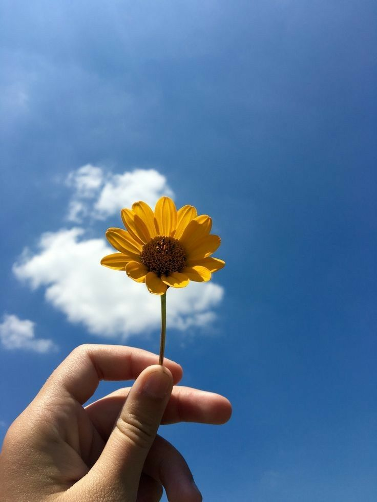 AestheticㅇAmbitiousㅇAsian | 꽃, 해바라기 그림, 사진 포즈