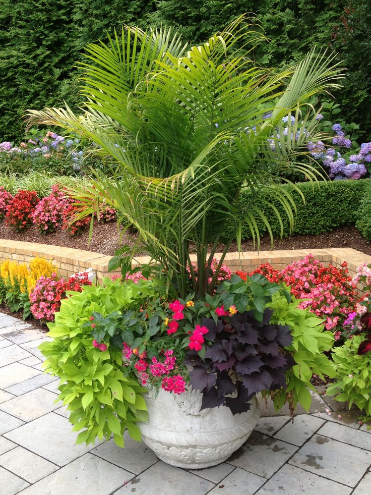 Sometimes a large planter that is dramatic is all you need. This planter, coupled with the bedding plants behind, gives a dramatic focal point at the end of a pool that can be seen from all angles. Bright mixes of color cascade from the base while the tropical palm adds drama and height.