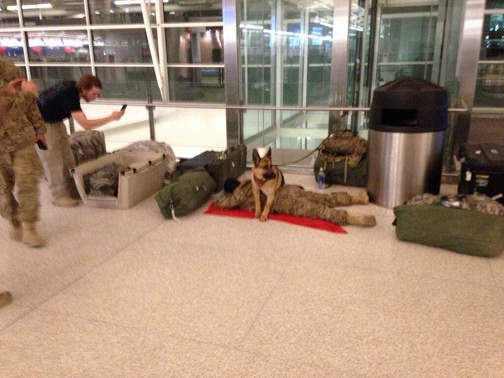 Perro militar protege a un soldado que duerme en el aeropuerto.
