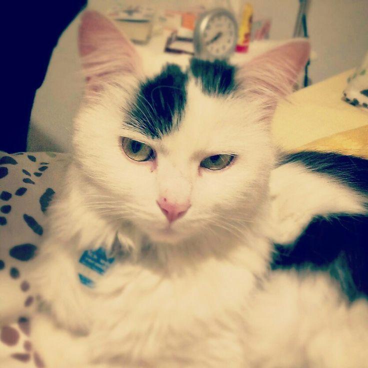#skepticalcat