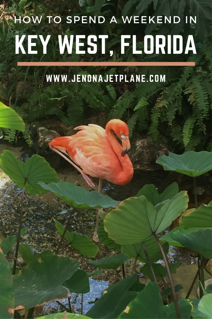 How to spend a weekend in Key West, Florida! Relax and enjoy the tropical vibes, flamingos and all.