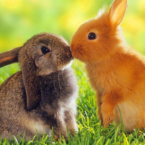 Frasi sui conigli