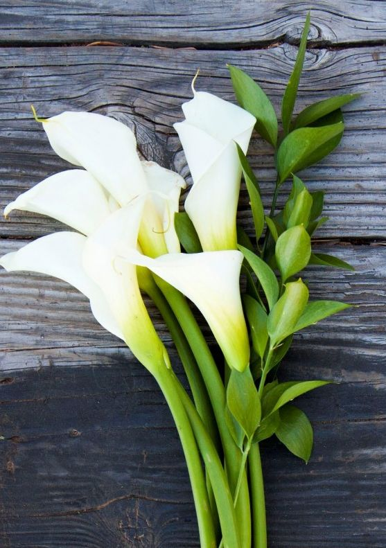 25 best calla lily images on pinterest calla lilies calla lillies white calla lillies mightylinksfo