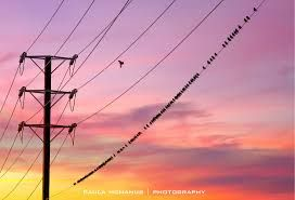 Image result for aussie power lines