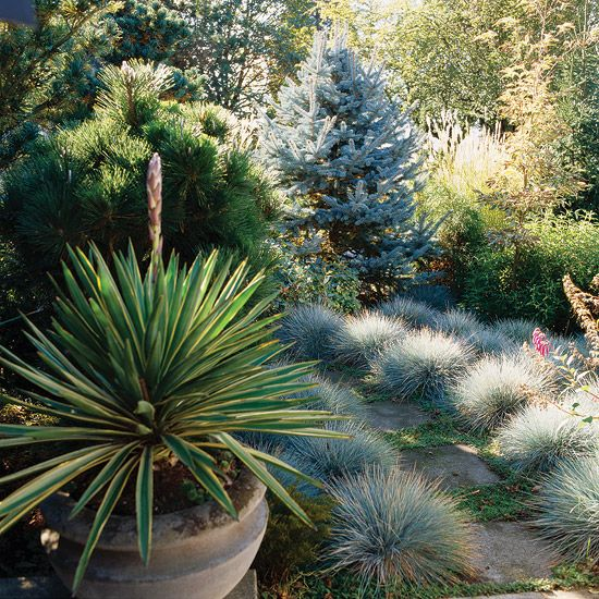 15 ways to use ornamental grasses in your landscape for Small blue ornamental grass
