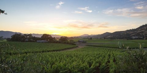 Napa Valley Travel Guide - Napa Valley Wine Auction
