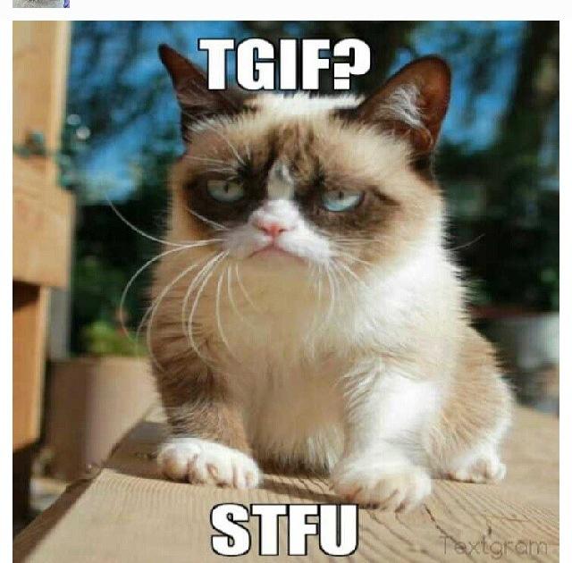 Tgif Stfu Grumpy Cat Grumpy Cat Grumpy Cat Quotes Grumpy Cat