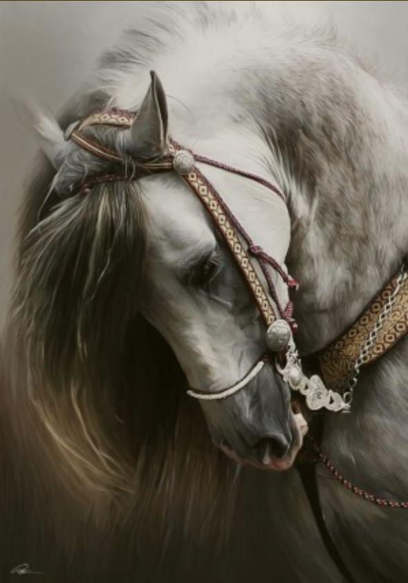 Beauty: Beautiful Horses, Arabian Hors, Digital Paintings, Digital Art, Grey Hors, Hors Art, White Hors, Off Paintings, Beautiful Creatures