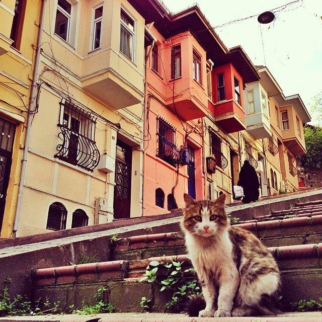 BALAT neighborhood and a lovely cat. Istanbul, Turkey. Photography by Mustafa Seven [@ mustafaseven]  Thanks to Mustafa Seven for sharing this wonderful photo. #old #city #tarihimerkez #tarihiyarımada #destination #vacation #photography #istanbulphotos #fotoğraf #love #streets #cats #streetcats