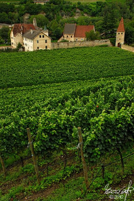 Vineyards of Novacella Abbey, Trentino-Alto Adige, Italy South Tyrol