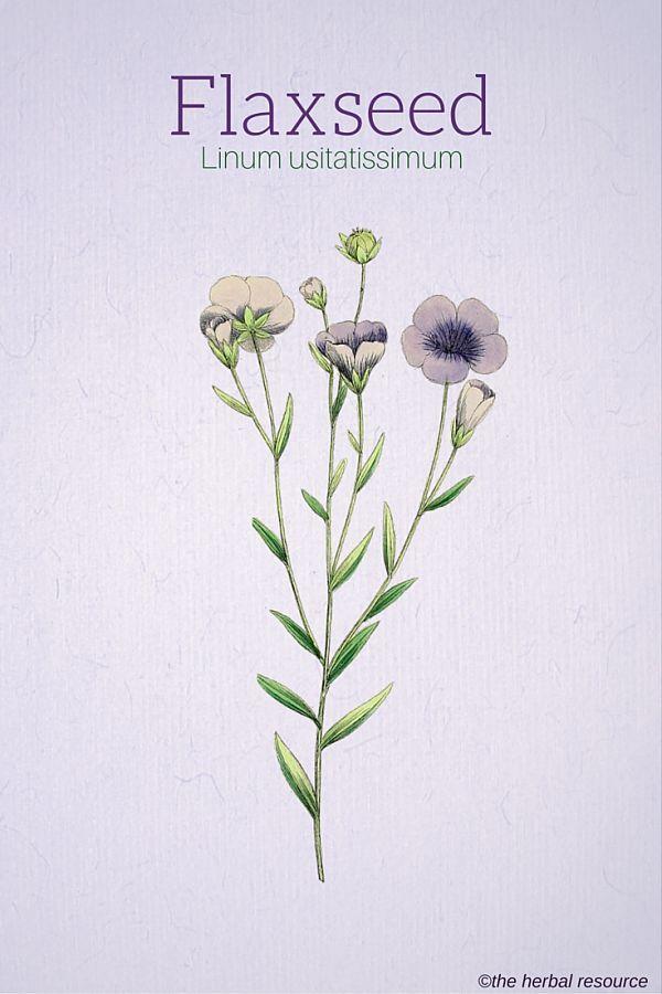 Flaxseed (Linum usitatissimum)