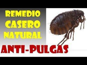 Remedios Caseros para las Pulgas en Perros y Gatos - YouTube