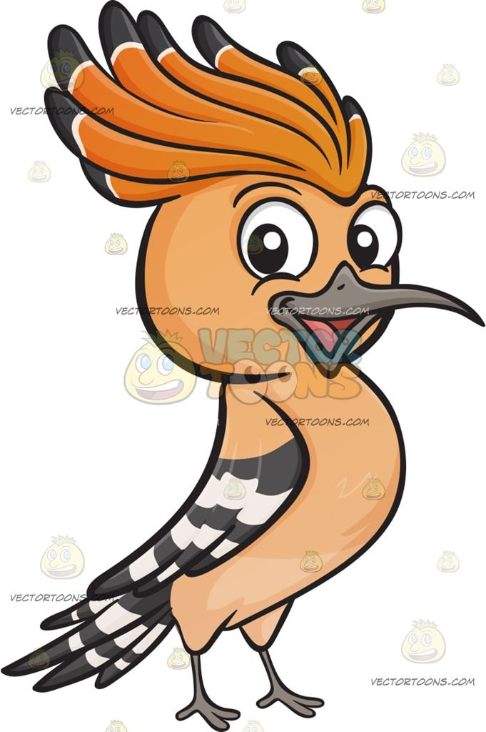 a happy hoopoe bird a bird with orange feather mohawk