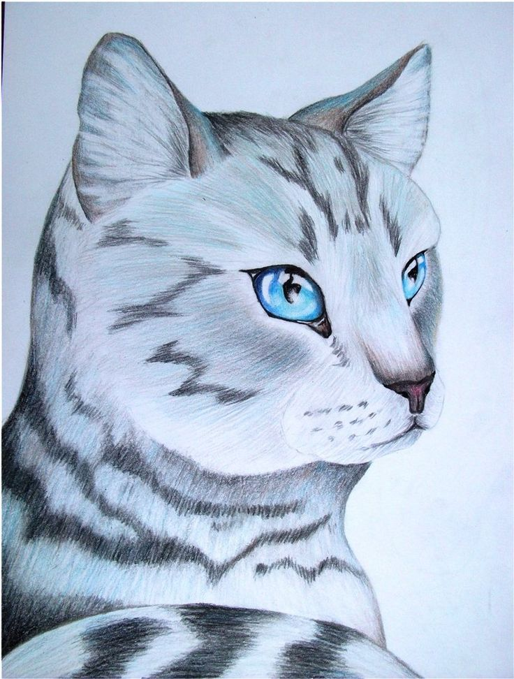 how to draw a warrior cat on paper