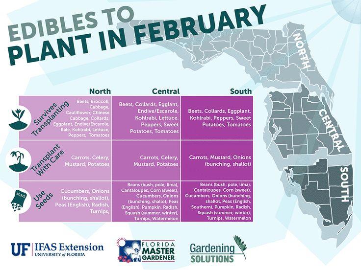 Florida Essbare Pflanzen im Februar