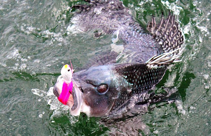 1000 Images About Ma Recreational Fishing On Pinterest