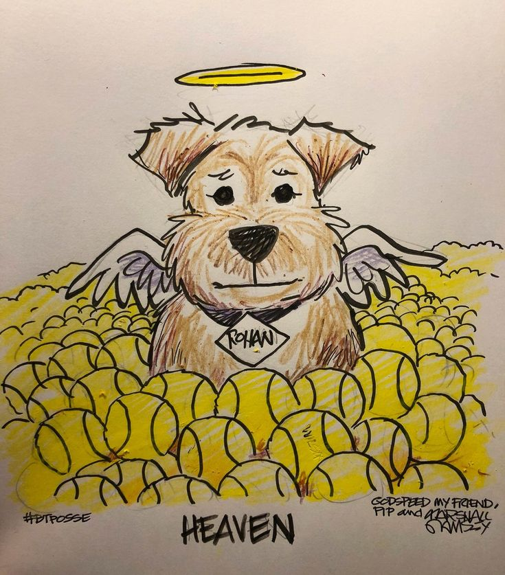 """Pip the dog on Twitter: """"In memory of my #BTPosse pal @RohanTheBT. Godspeed my friend. You were and always be loved.… """""""