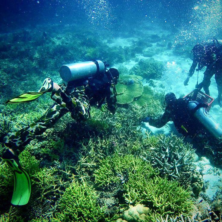 """Anggota Korps Marinir TNI-AL dari Batalyon Pertahanan pangkalan Lantamal VI mengumpulkan bibit terumbu karang di perairan pulau Kodingareng Keke,…"""