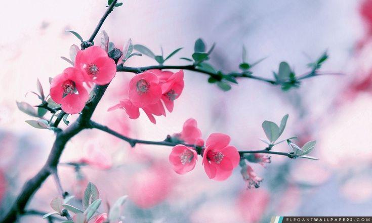 Fleur rose Fleurs, Printemps