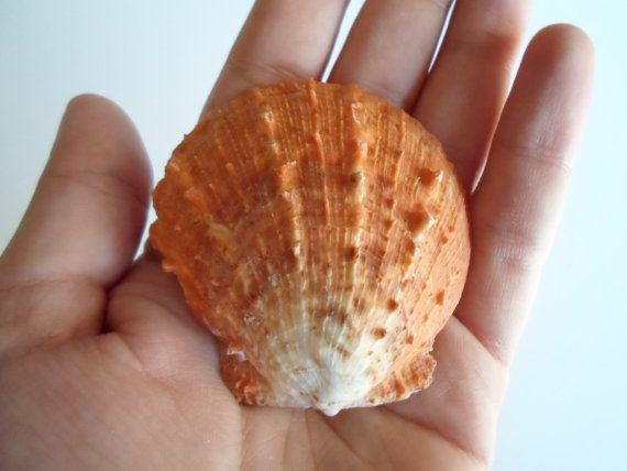 natural orange sea shell от AEGEANTREASURES на Etsy