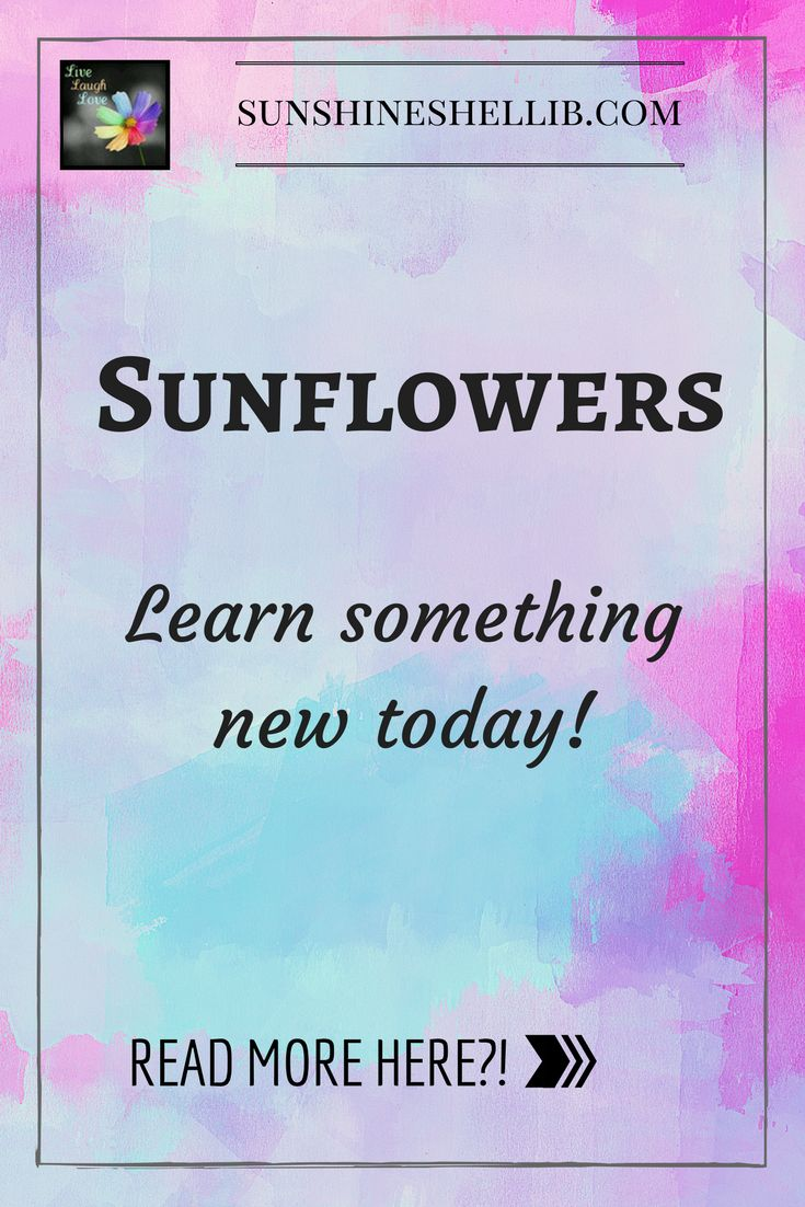 Interesting Facts about Sunflowers #sunflowers #interesting #learn