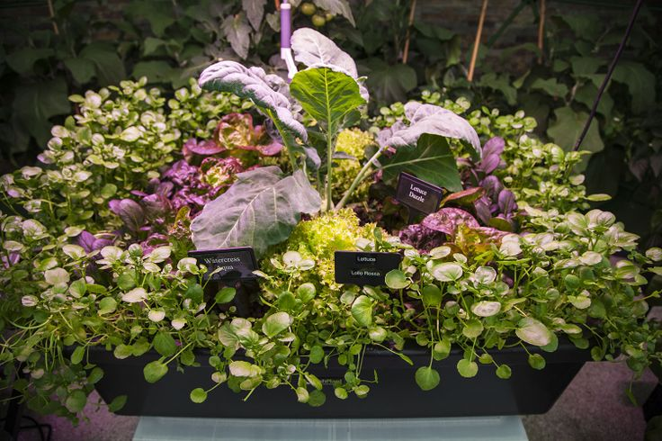 HydroGarden at RHS Chelsea Flower Show 2013. HydroGarden is one of the true pioneers of the UK's hydroponics industry. https://www.hydrogarden.com/