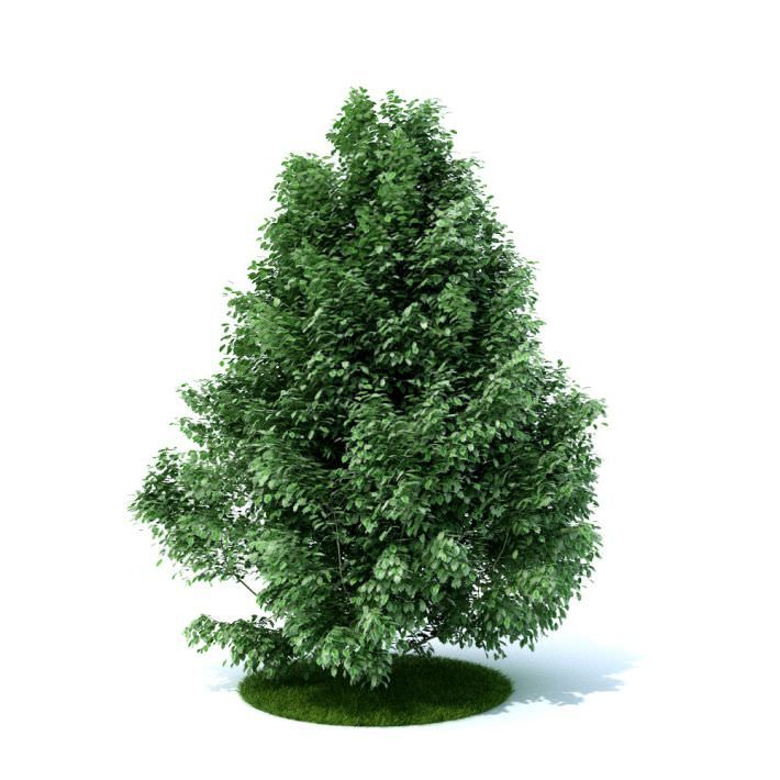 Green Mini Flowing Bush 3d Model Plants 3d Model Garden Plants