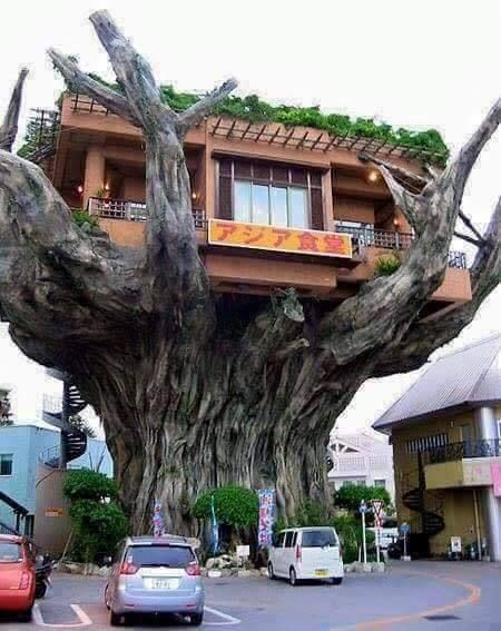 The Naha Harbor Diner In Okinawa, Japan❤️