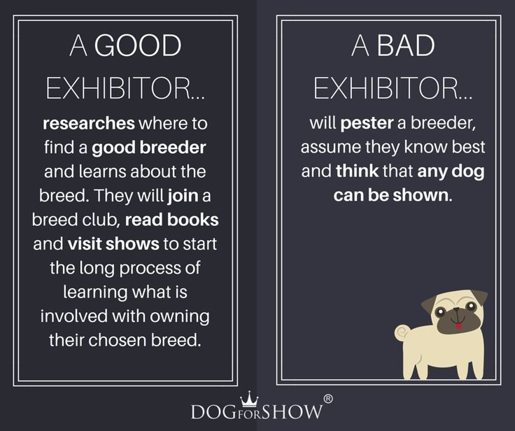 And which one are you?  We would like to see only the good one in our worldwide community of professional breeders,owners,handlers at dogforshow,have a lovely Monday.