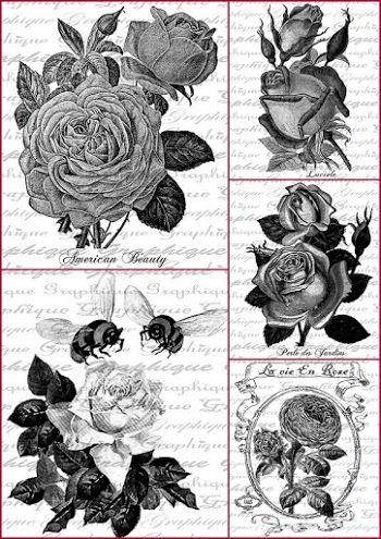Rosas en Blanco y Negro: Etiquetas para Imprimir Gratis.