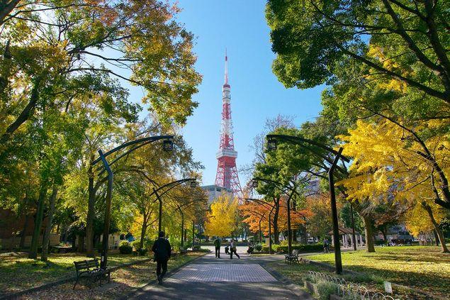 """【芝公園の紅葉情報】明治6(1873)年に、上野、浅草、深川、飛鳥山と共に日本で初めて公園として指定された、歴史ある公園。例年11月下旬から12月上旬に見頃を迎える、4号地プロムナードの東京タワーを臨むイチョウの紅葉は必見だ。ウォーカープラスの""""紅葉名所2017""""では、全国約700ヶ所の紅葉情報を掲載 !"""
