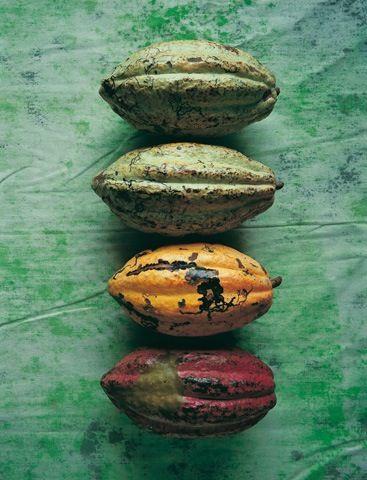 Les  fèves de Cacao le super-aliment qui est aussi bon pour le corps que pour la peau