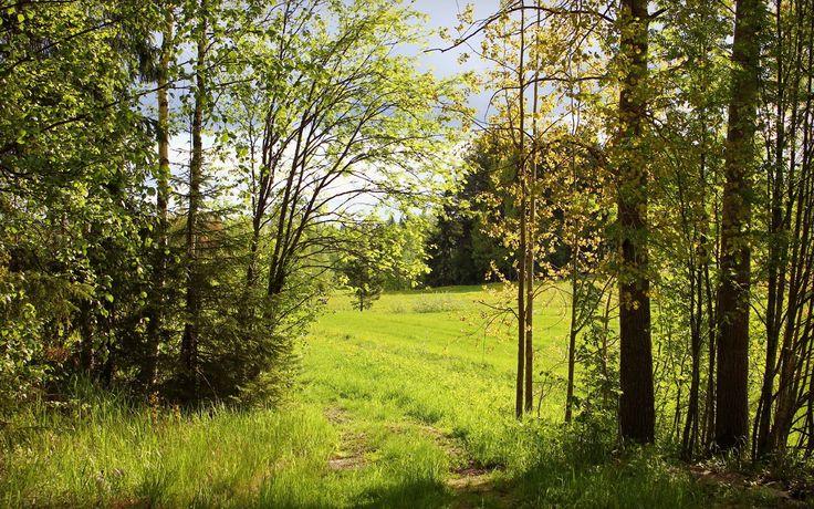 46 Best Summer Forest Images On Pinterest
