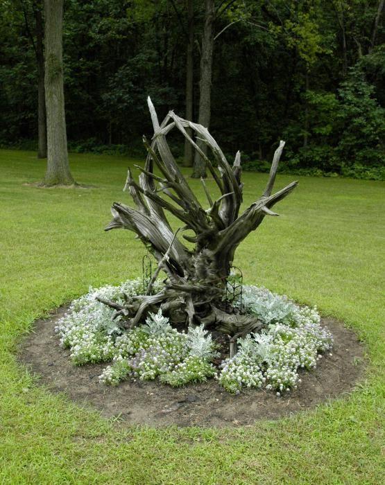 Attractive Driftwood As Garden Art.