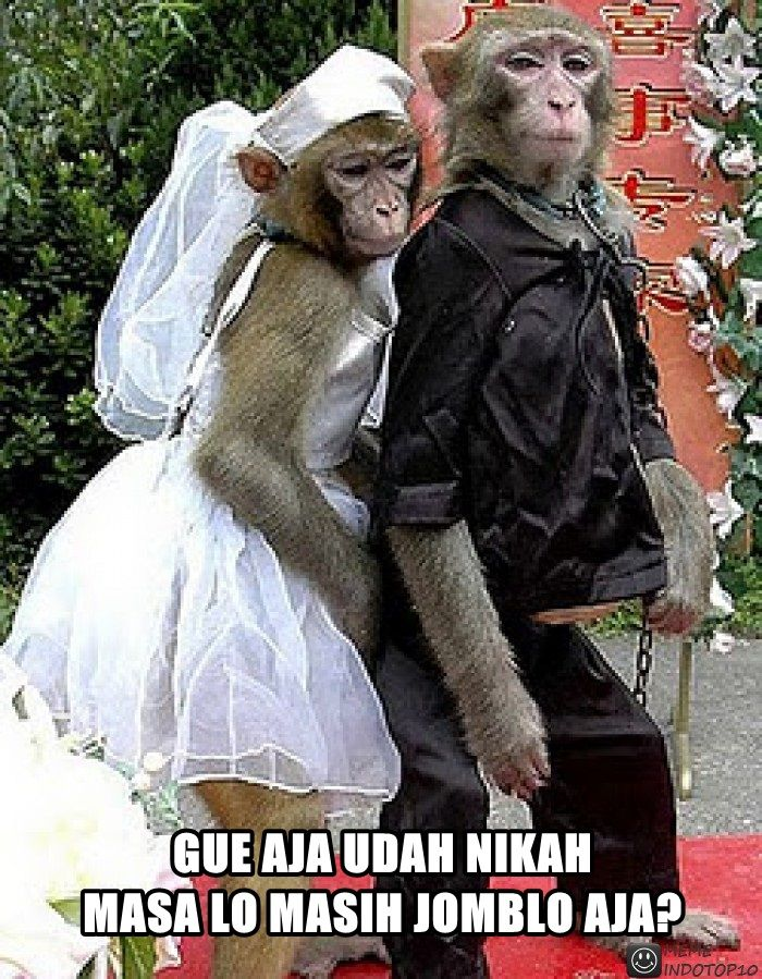 25 Meme Kelakuan Lucu Monyet Yang Bikin Ketawa Ngakak Lucu Tertawa Meme