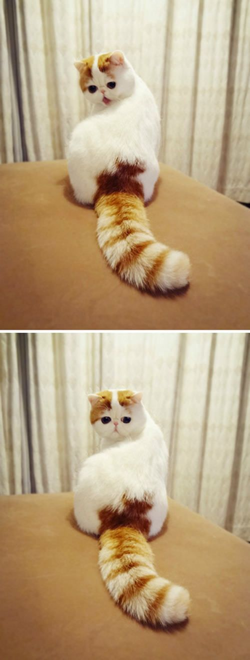 top 30 cutest cats pictures snoopy cat love cats pinterest katzen. Black Bedroom Furniture Sets. Home Design Ideas