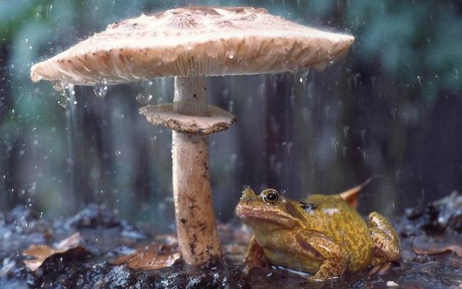 Museu britânico expõe imagens premiadas de vida selvagem - Ciência - iG