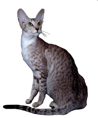 Looking for grain-free high protein high fat dry cat food... DRY CAT FOOD COMPARISON CHART: The nutritional profile of a cat's favorite food: an adult mouse.  Protein: 55.8. Fat: 23.6.