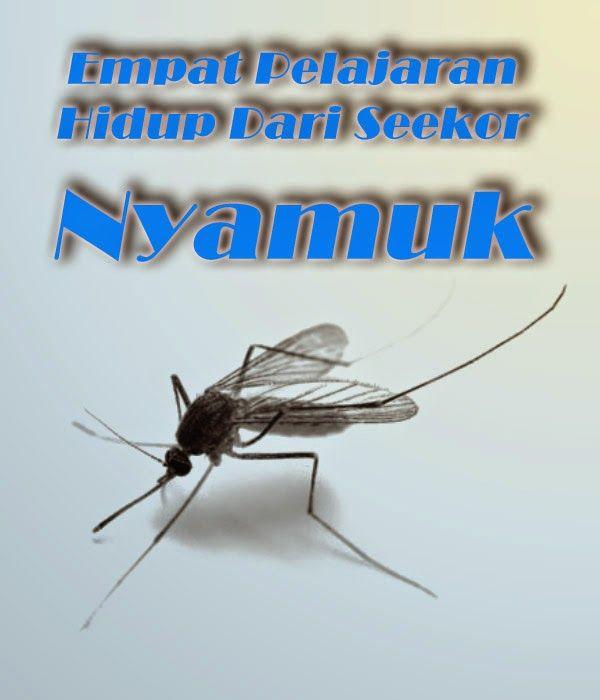 Empat Pelajaran Hidup Dari Seekor Nyamuk | Spesial Tips : Indahnya Berbagi