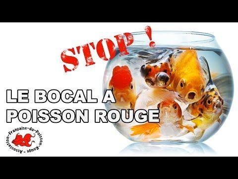 Les 25 meilleures id es de la cat gorie aquarium pour for Bocal poisson acheter