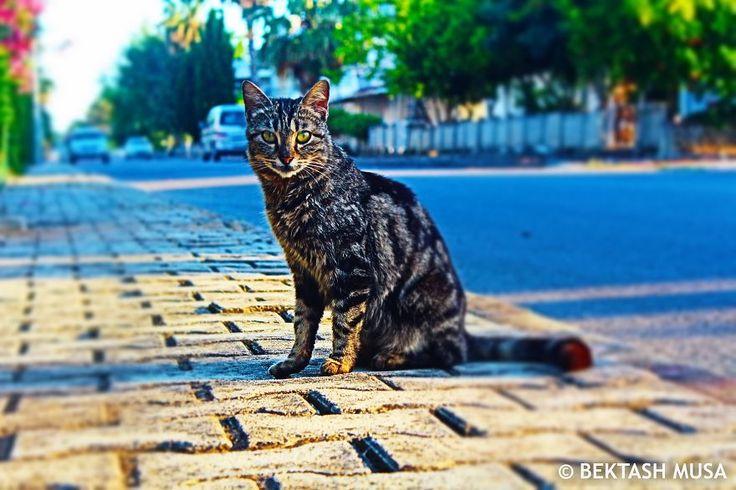 Genelde ev hayvanı olarak beslenenlere ev kedisi, ya da diğer kedigillerden ve küçük kedilerden ayırmak gerekmiyorsa kısaca kedi denir.