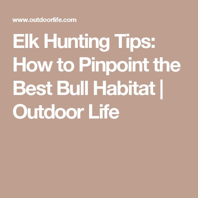 Elk Hunting Tips: How to Pinpoint the Best Bull Habitat | Outdoor Life