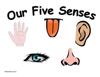 The 17 best images about Teaching 5 Senses on Pinterest ...