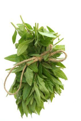 How to Grow Lemon Verbena