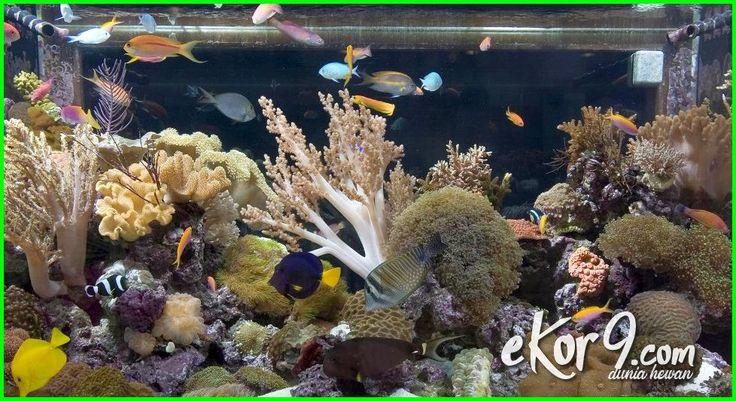 Mengapa Akuarium Air Laut Cepat Keruh, Bagaimana Mengatasinya?