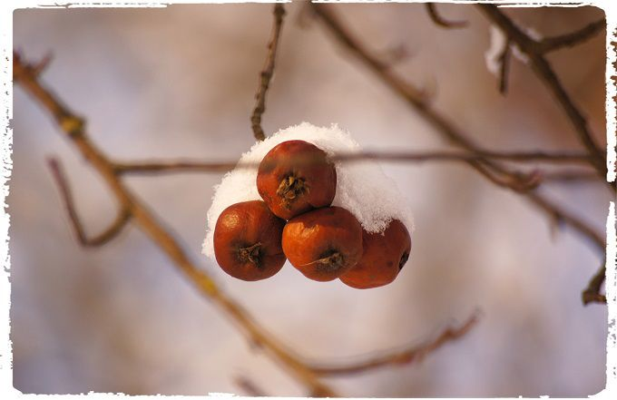 Russian Winter #2. #poetry #freeimages #freepictures #freephotos #haiku #winter #russia #cold