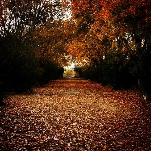 "Eliza's K photos | ""Autumn Leaves"" #autumn #nature_greece..."